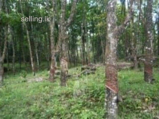 Land for sale 22 Acres Eheliyagoda