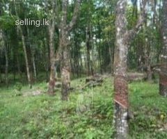Land for sale 22 Acres Eheliyagoda