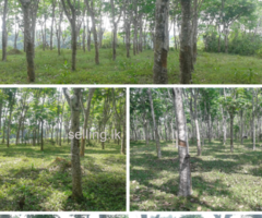 Land for immediate sale in Kalutara