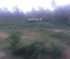 Land for  sale in Hambantota