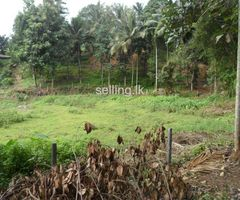 land for sale in pilimathalawa Kandy