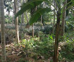 Bordering river Hanwella 1 acre cocnut land