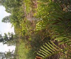 Land for sale in Hikkaduwa  - near the  highway exit විශාල ඉඩම ඉක්මණින් විකිණීමට