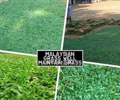 Manel Garden Design Grass & Interlock