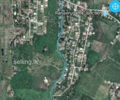 Cinnamon land for sale in Galpatha