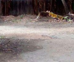 35 Perchers Near to Paliyagoda Highway entrance