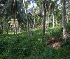 land for sale katupota  pubbowa