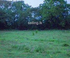 Land for sale in Anuradhapura