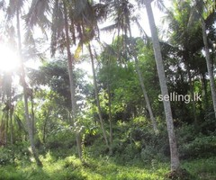 Land for sale Narammala