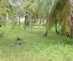 Land For Sell in padeniya kurunegala