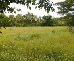 Land For Sell in padeniya kurunegala