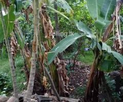 Land for sale with old house in Colombo 14