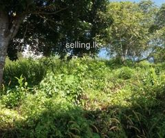 9 ACRE LAND FOR SALE AT WELIGAMA