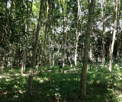 Land for sale at Kalagedehena