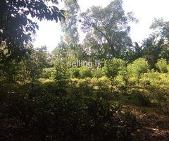 Land for sale in bandarawela