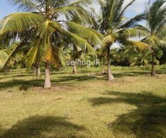 Nuwaraweva lake front land with house sale or rent.