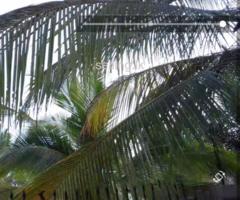 Coconut estate for sale in Puttalam