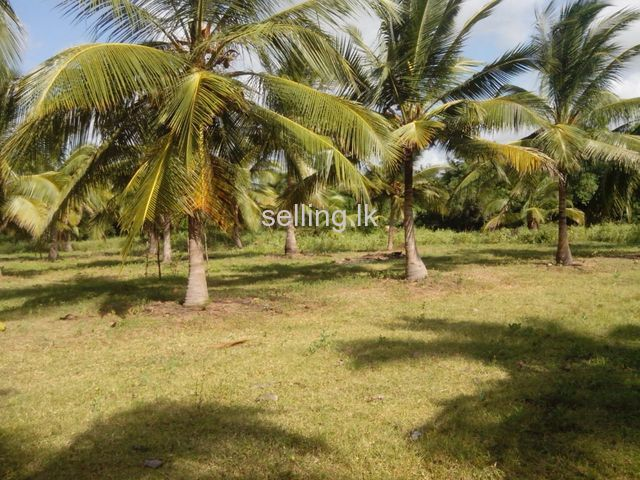 Lake front land for rent or sale