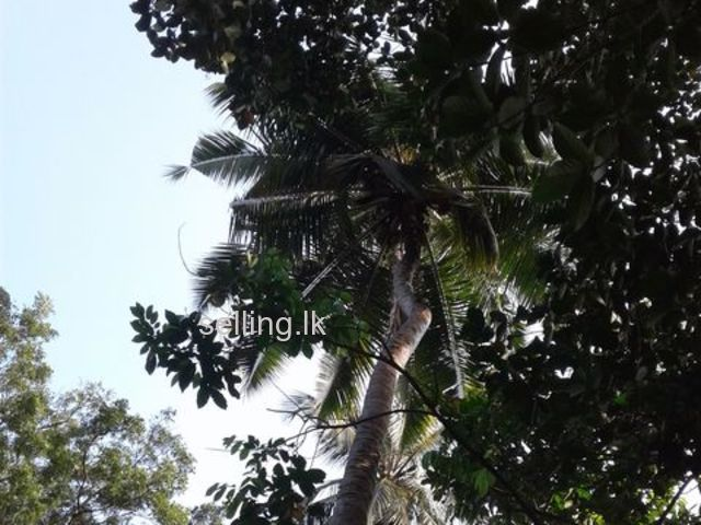 Land for sale at kandy