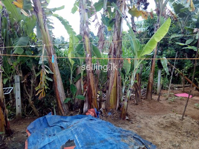 Land for sale in Mawanella
