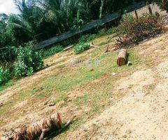 Land for sale in akkaraipattu