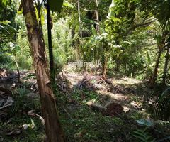 Land in Kandy, Pujapitiya for sale