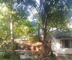 Land and House for sale near rathgama lagoon