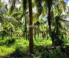 6 Acre land for sale in welpalla