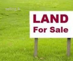 Land for sale avissavella