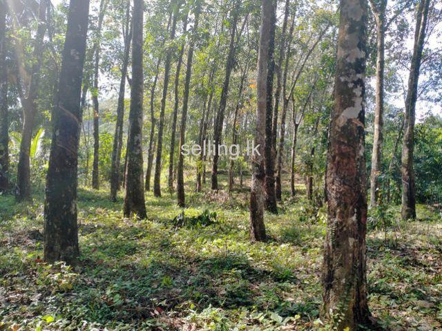 Rubber Land for Sale in Pugoda/Gampaha