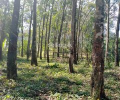 Rubber Land for Sale in Pugoda/Gampaha