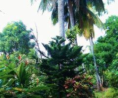 Land for Sale - Mirihana