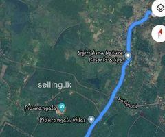 Valuable land for immediate sale in Sigiriya
