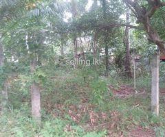 Land for Sale in Gampaha - Nedagamuwa Kotugoda