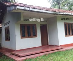 Coconut Land with 4 Bed room house in Divulapitiya