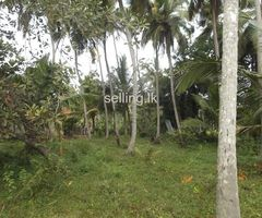 Coconut Land For Sale in Koswatta
