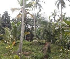 Coconut Land For Sale in Koswatta