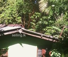Perch 36 land with two house for sale