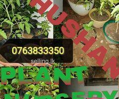 Thushan Plant Nursery