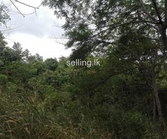 Dambulla 4.25acre land for sale