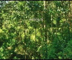 Land for sale in badulla