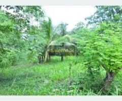 Land for sell in udawalawa