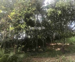 land witn house for sale in Nawalapitiya