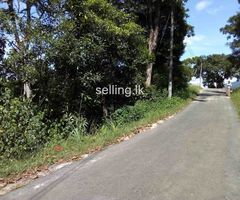 Land for Sale in Rattota
