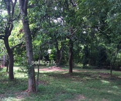 Land for sale in Dabulla kandy A9 main road