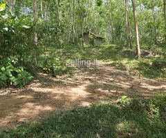 Rubber Land for sale in Elpitiya