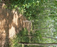 Rubber Land for sale in Elpitiya