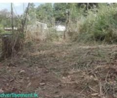 LAND FOR SALE IN KANDY - LEWELLA (MONEY URGENT)