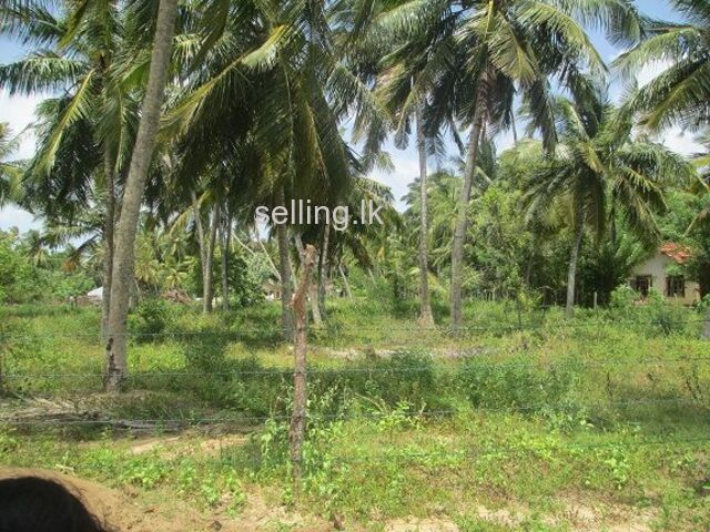 Land for sale in Ranna