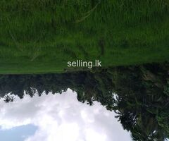 Valuable 83 perch  residential land in veyangoda.